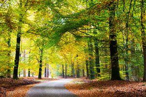 Bosweg in natuurgebied de hoge veluwe van