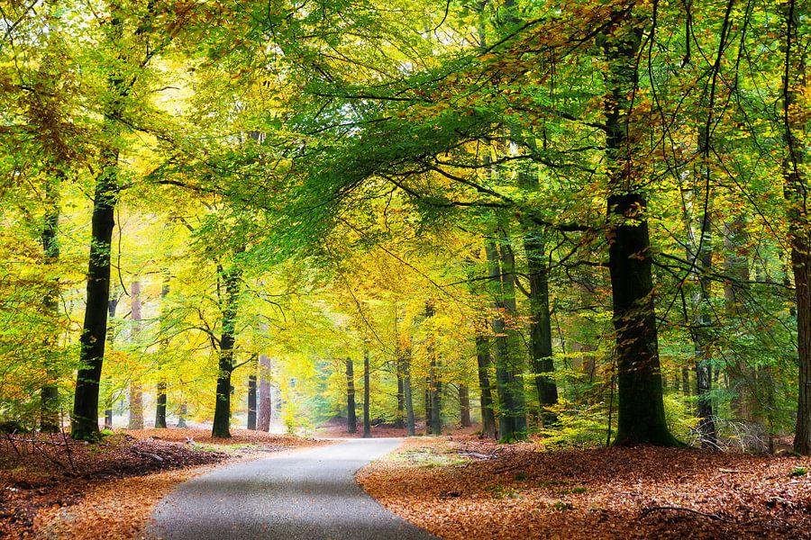Bosweg in natuurgebied de hoge veluwe