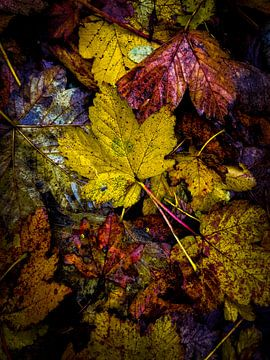 Herfstbladeren  van Loïs Jongedijk