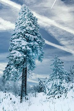 Tanne im Schnee von Johnny Flash