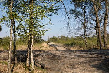 Knuppelbrug in Nationaal park de Groote Peel, lente van Ger Beekes