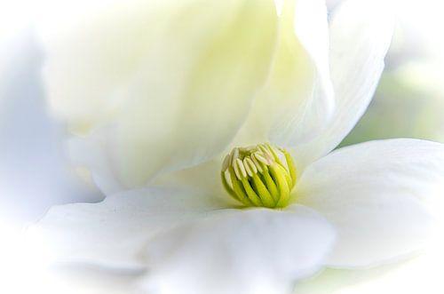 Close-up van een bloemetje van de clematis