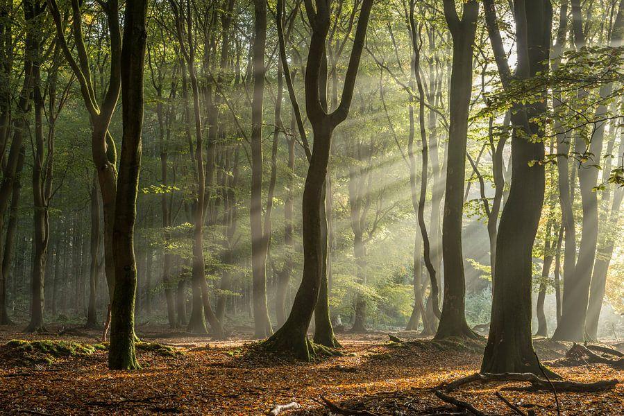 Nevel in het Speulderbos van Gerry van Roosmalen