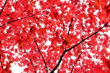 Ist es orange oder rot? von Samira Uddin
