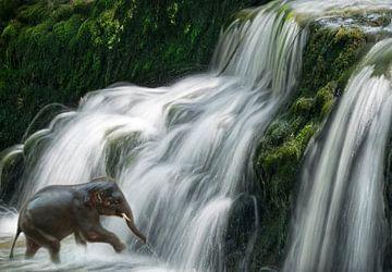 Elefant im Wasserfall von