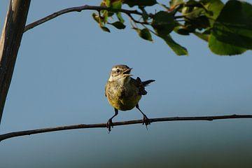 De vogel zingt zijn eigen lied van Lennard Kazen