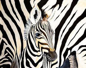 jonge Zebra close up van