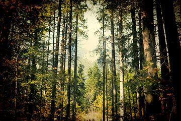Bayerischer Wald im Lomo effekt von PhotoArt Thomas Klee