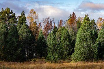 Kleurrijk herfstbos van Ella Schnur