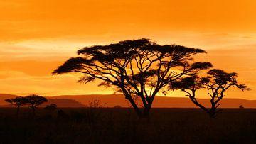 Sonnenuntergang in Afrika auf der Savanne in Tansania von Robin Jongerden
