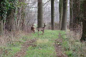 Twee herten in het bos van Anja Uhlemeyer-Wrona