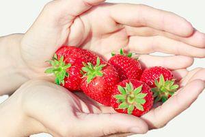 Rijpe aardbeien in beschermende handen