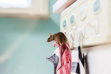 Mouse sur Saskia Bakker
