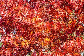 Rotes Laub von Frans Blok