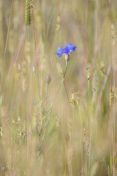 Violett von Andy van der Steen - Fotografie