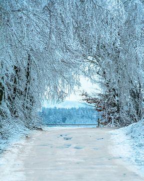 Winter Wunder land von Johnny Flash