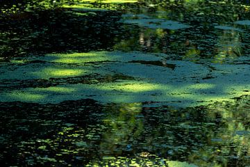 lichtpuntjes op het met kroos bedekte water van Mandy Metz