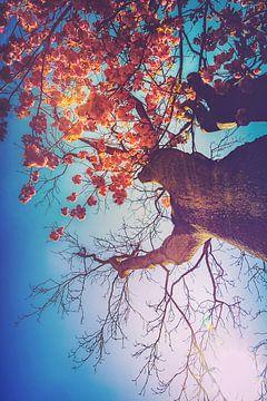 Représentation onirique d'un cerisier en fleurs dans le jardin botanique de Duisbourg. sur Jakob Baranowski - Off World Jack