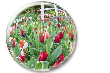 Glazen bol met rode tulpen van Ben Schonewille