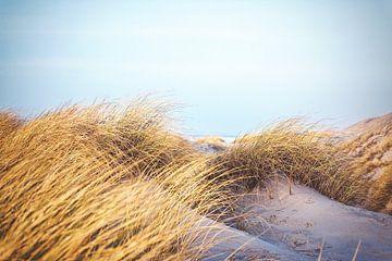 Goldenes Gras und weißer Sand von Florian Kunde