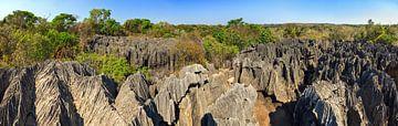 Tsingy de Bemaraha Panorama van Dennis van de Water