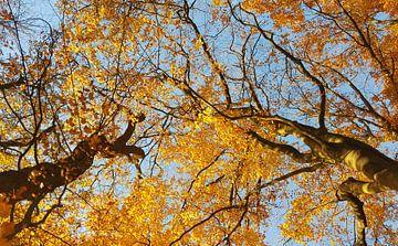 Herfstbladeren van Keline van Dijk