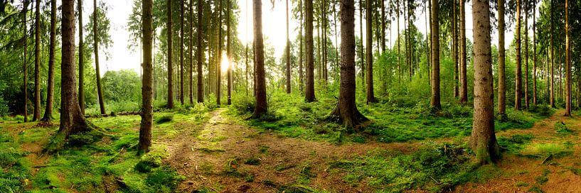 Een ochtend in het bos van Günter Albers