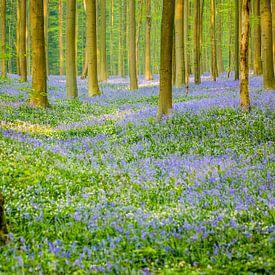 Lost in the forest van Gerhard Nel