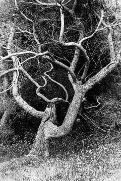 L'arbre capricieux