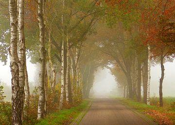Landstraße im Herbst von Caroline Lichthart