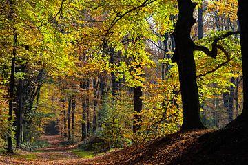 Herbstfarben von Marieke Funke
