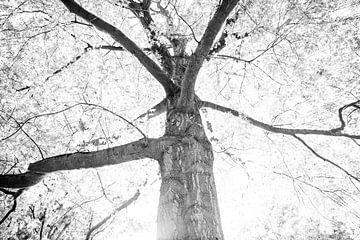 Träumen im Wald | Schwarz-Weiß-Druck | Sommersonne durch Bäume von Wendy Boon