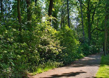 Der grüne Weg in einem Weerter-Park von J..M de Jong-Jansen