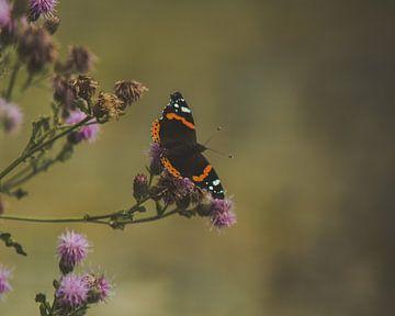 Prachtige vlinder op de bloemen van een distel