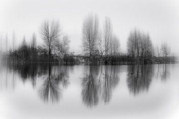 Gereflecteerde bomen, Fabrizio Massetti van 1x