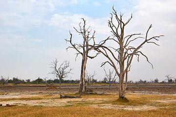 Dead Tree Island in Moremi National Park, Botswana van Jolene van den Berg