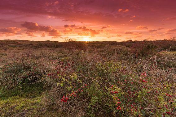 Zonsondergang in de duinen van Texel