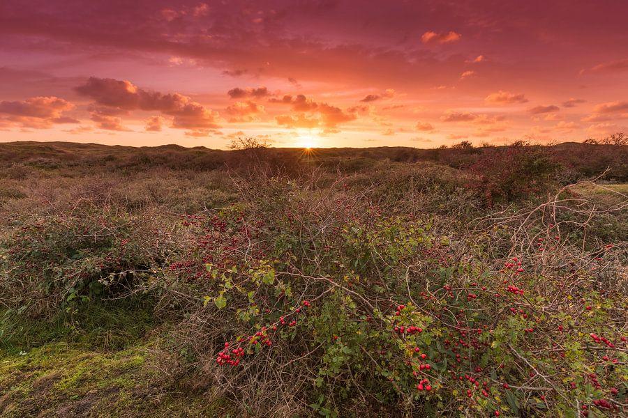 Zonsondergang in de duinen van Texel van Rob Kints
