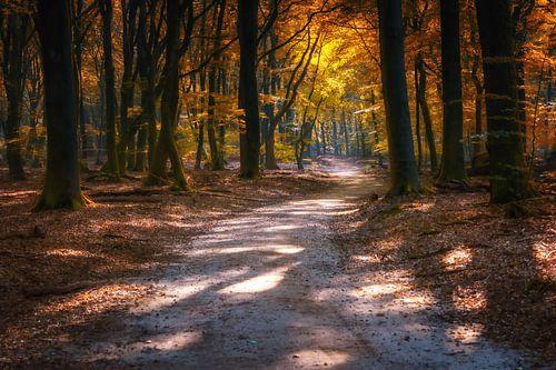 Bos met bospad in herfstkleuren en dromerige sfeer