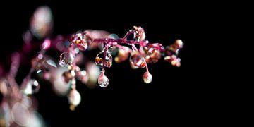 Water pearls van