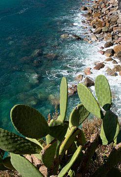 Cactus boven azuurblauwe zee met rotsen van Bianca ter Riet