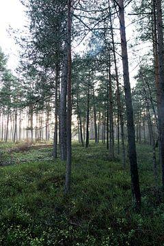 Wald#1 von Mike Ahrens
