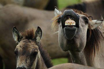 Niet bang voor de tandarts van
