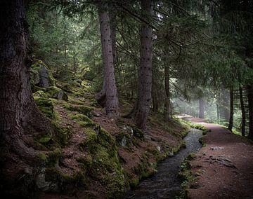 Bisse Vieux, Zwitserland