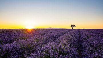 Lavendel von Manjik Pictures