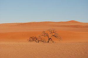 Eenzame boom van Miranda Zwijgers