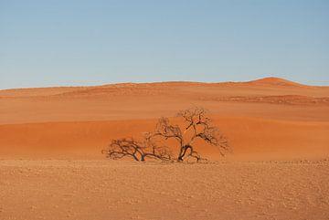 Eenzame boom von Miranda Zwijgers