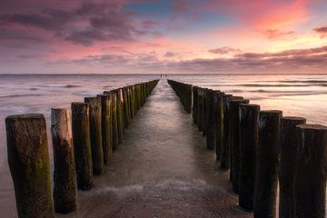 Têtes d'échasses sur la plage au coucher du soleil sur Arnoud van de Weerd