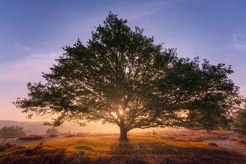 Zonneboom von Jeroen Lagerwerf