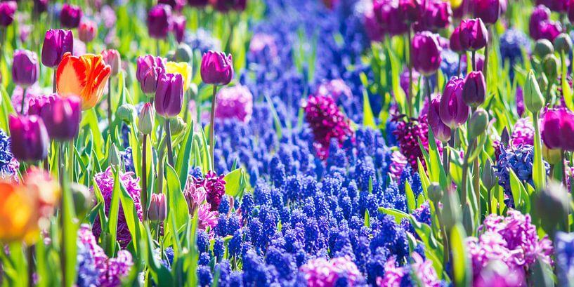 Lots of flowers van Jelmer Jeuring